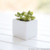5cm planter image 1